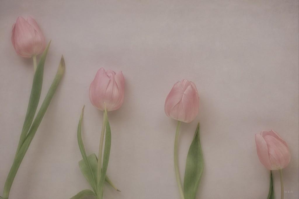 4 tulipanes, 4 pilares