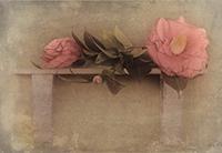 Colección Tiempo de espera y flores