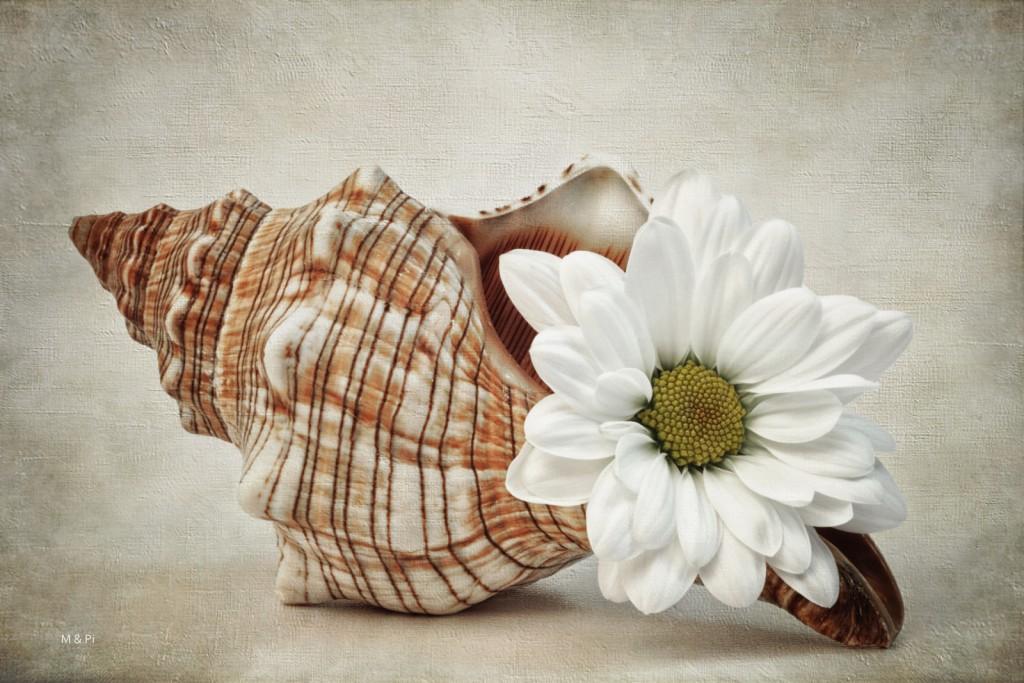 Caracoleando flores...