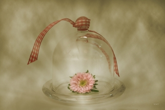 Fantasía con flor